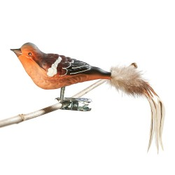 Glasfugl- Bogfinke