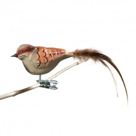 Glasfugl- Gråspurv