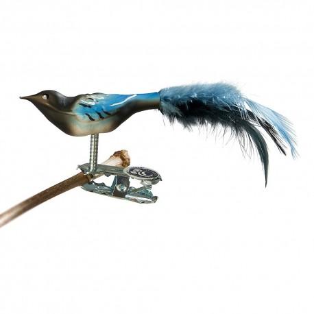 Glasfugl- Husskade- Mini
