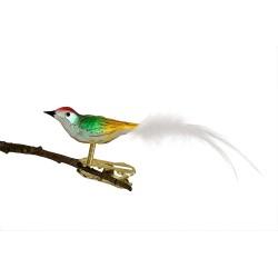 Glasfugl- Guld- Grøn- Rødt hoved