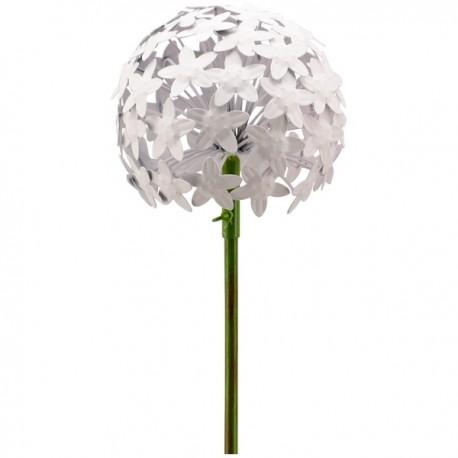 Allium- lille- hvid